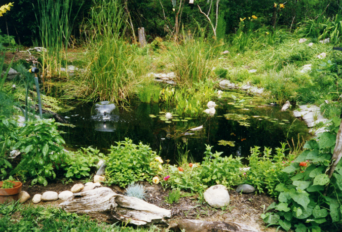 Ponds for Small pond construction